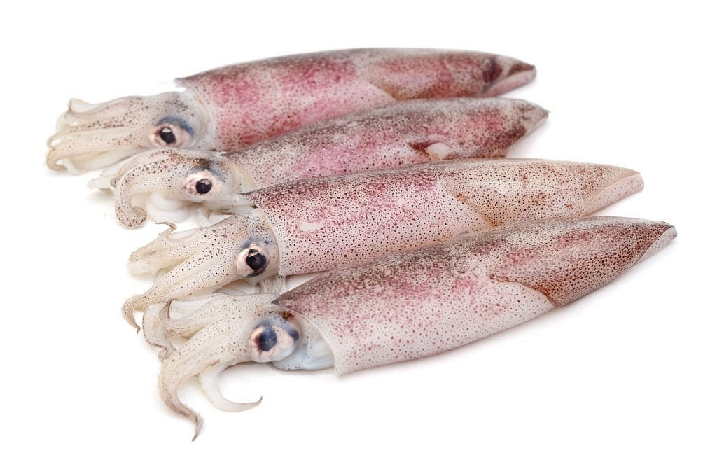 Patagonian squid whole round